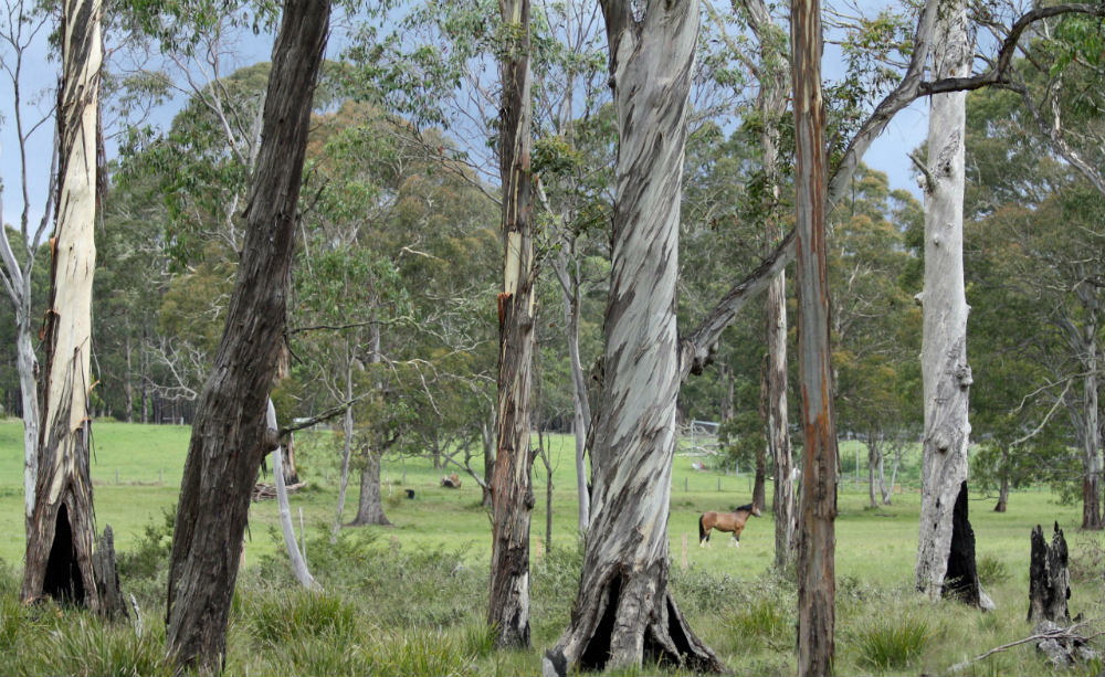 A typical country Australian block of land, cleared sections bordered by fire-prone areas of bush and tall trees